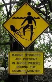 jellyfish warning.jpg
