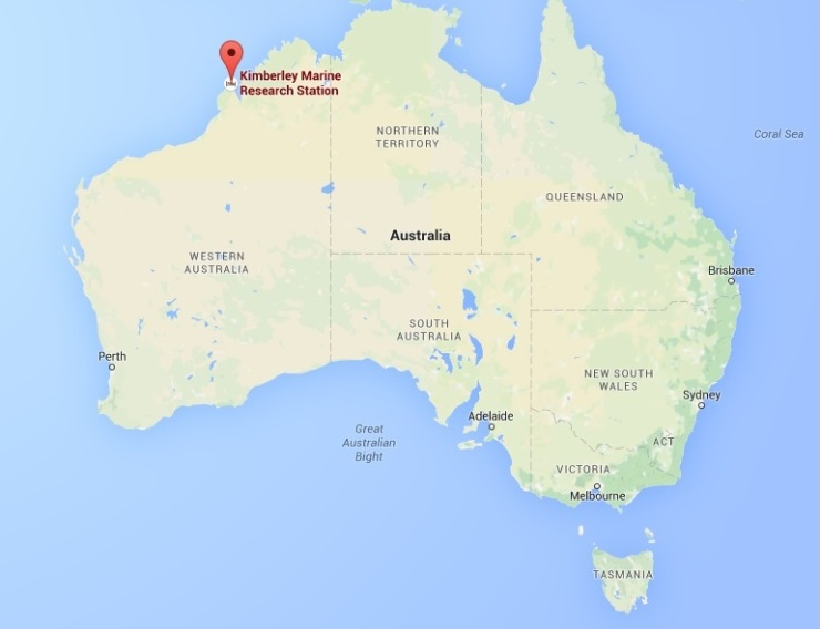 Kimberley, Western Australia. Due to its remote location, the reefs in this area are not as well studied as the Great Barrier Reef in the east.