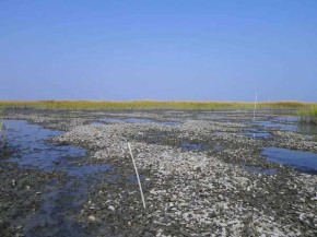 #NoFilter: Oyster restoration and its challenges