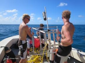 Shark Conservation in St.Maarten
