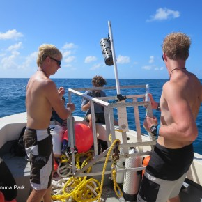Shark Conservation in St. Maarten