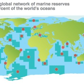 The Rise of Marine Parks: Will it be Enough?