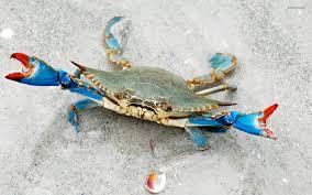Blue crab www.splendidwallpapers.com