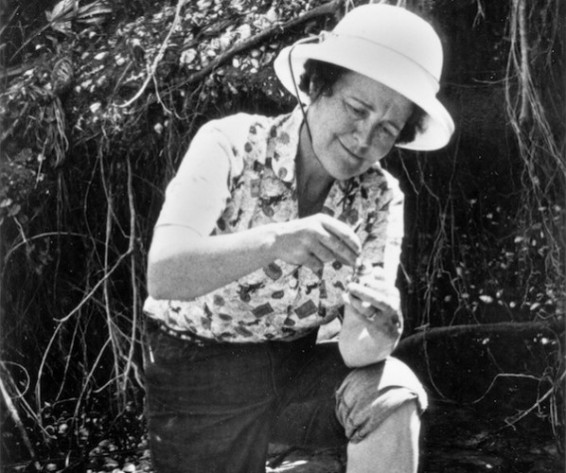 Dr. Ruth Patrick in the field, circa 1970. Image from http://www.newsworks.org/index.php/local/roxborough/60176-longtime-chestnut-hill-resident-and-famous-ecologist-ruth-patrick-remembered-by-mentee