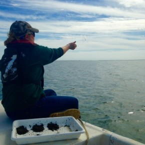 Mimicking Nature: Seagrass Restoration in the Chesapeake Bay