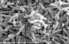White House Launches Microbiome Initiative, Includes the Ocean!