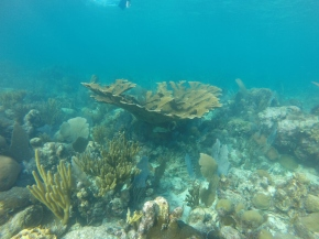 Does temperature dictate which corals can survive on a reef?