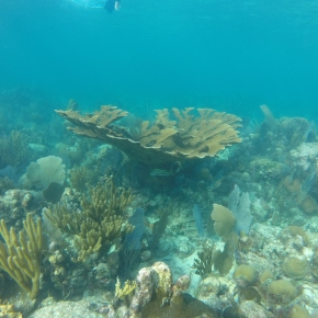 Does temperature dictate which corals can survive on areef?