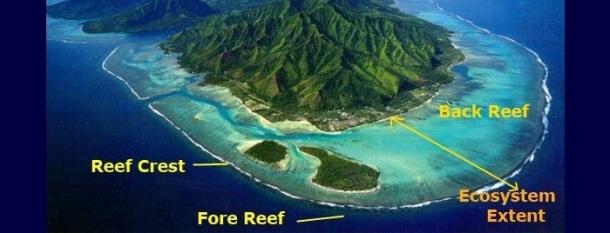 reef-zonation