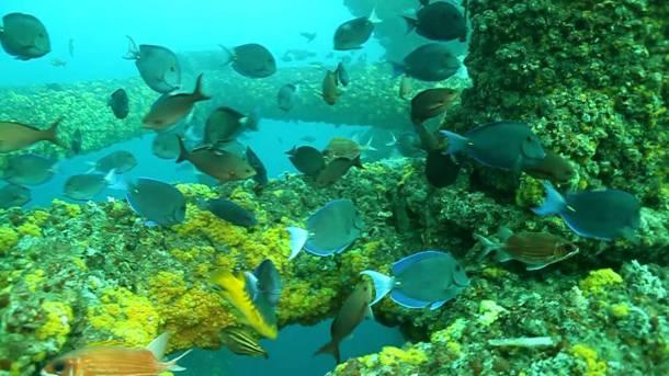 oil rig reef.jpg