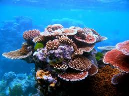 A tropical coral reef (source: wikipedia.org